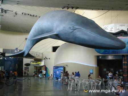 Aquarium of the Pacific